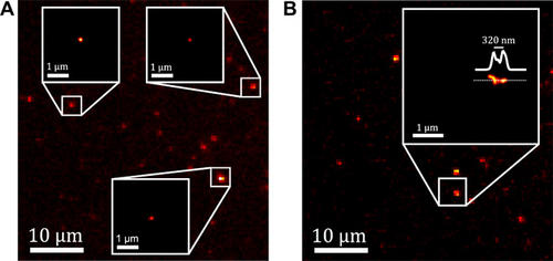 Super-localization and super-resolution imaging of single CNTs using photocontrolled luminescence intermittency.